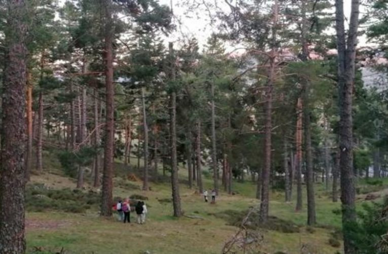 The town where there was not a single tree and now there are a hundred hectares of pine forest