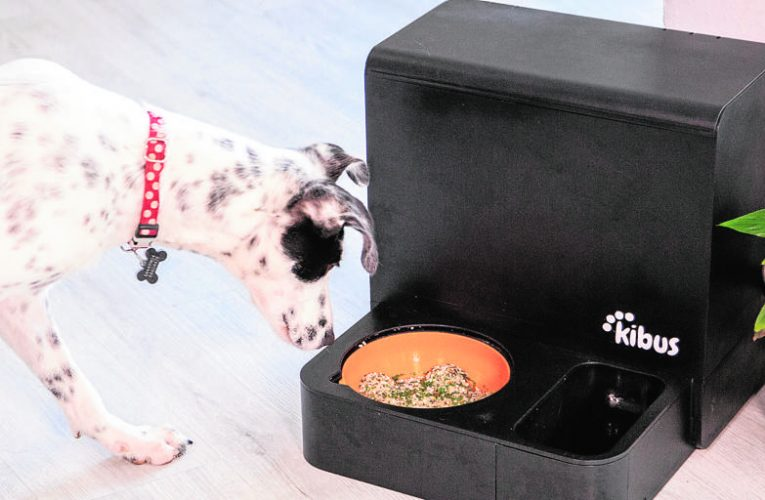 Pets, innovation turns into a beastly business