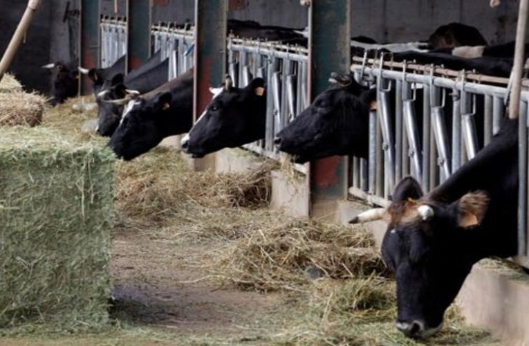 Farmers produce milk below costs since 2018 and lose 500,000 euros a day